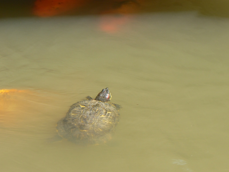 Even a turtle is in the act.